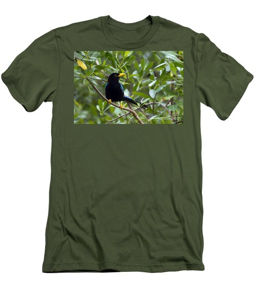 Immature Yucatan Jay Men's T-Shirt (Athletic Fit)