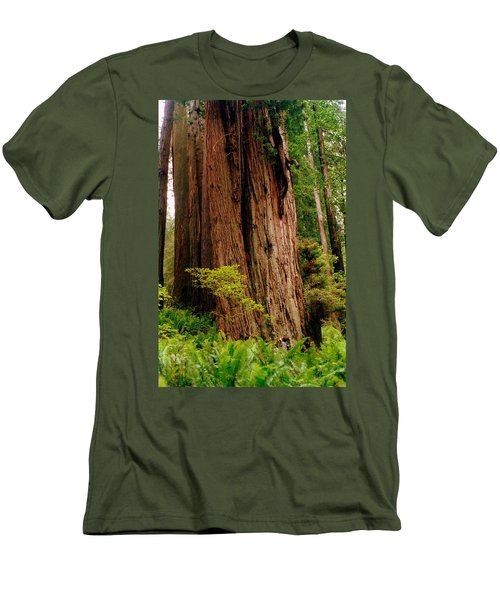 Kevin And The Big Tree - Redwood National Forest Men's T-Shirt (Athletic Fit)