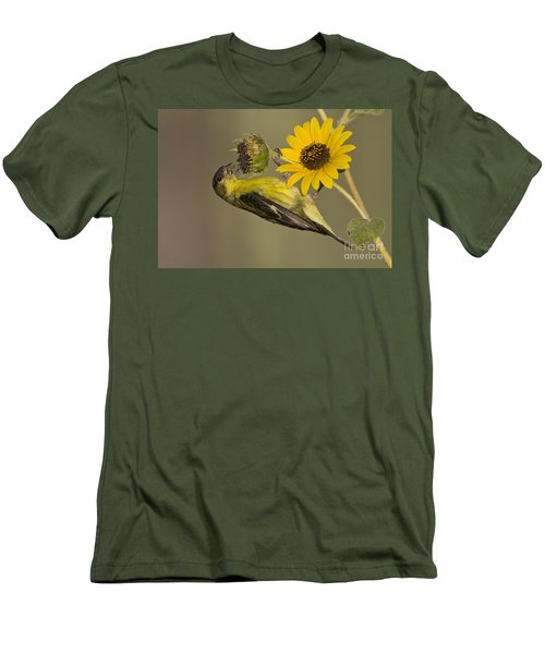 Lesser Goldfinch On Sunflower Men's T-Shirt (Athletic Fit)
