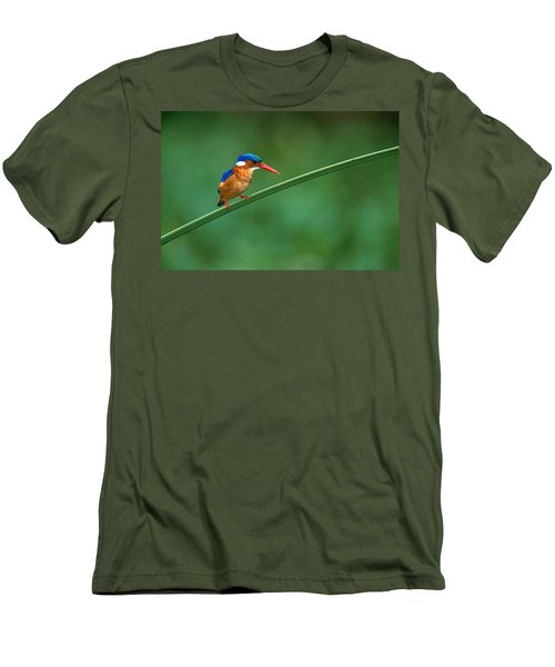 Malachite Kingfisher Tanzania Africa Men's T-Shirt (Slim Fit) by Panoramic Images