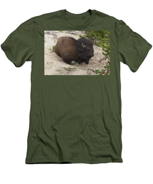 Men's T-Shirt (Slim Fit) featuring the photograph Male Buffalo At Hot Springs by Belinda Greb