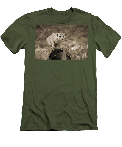 Meerkat On A Log Men's T-Shirt (Slim Fit) by Douglas Barnard