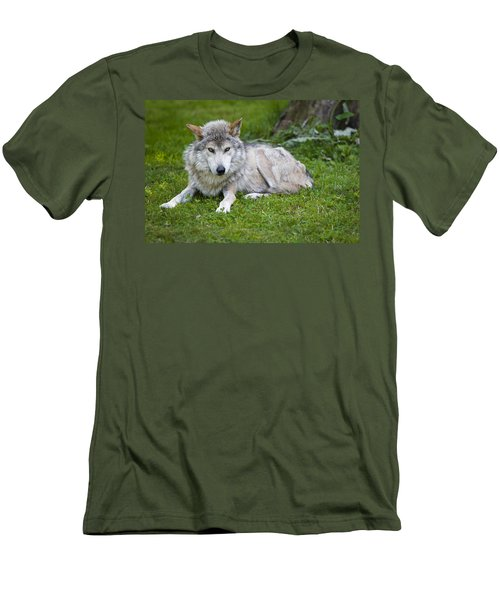 Men's T-Shirt (Slim Fit) featuring the photograph Mexican Gray Wolf by Sebastian Musial