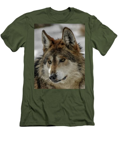 Mexican Grey Wolf Upclose Men's T-Shirt (Athletic Fit)