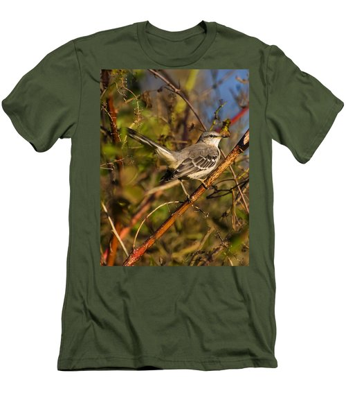 Northern Mockingbird Men's T-Shirt (Athletic Fit)