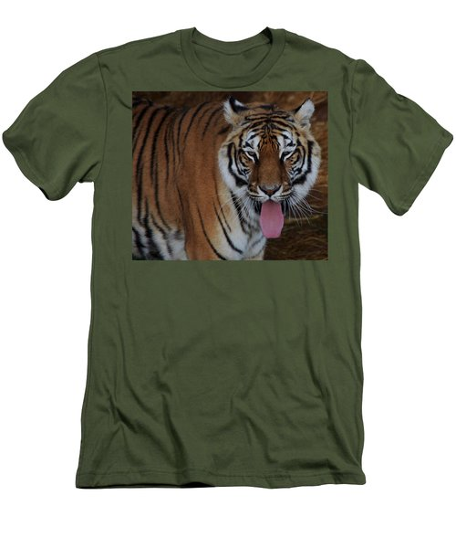 Out Of Africa  Tiger 2 Men's T-Shirt (Athletic Fit)