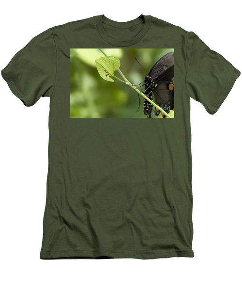 Men's T-Shirt (Slim Fit) featuring the photograph Pipevine Swallowtail Mother With Eggs by Meg Rousher