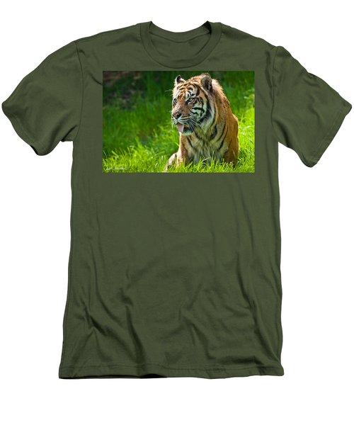 Portrait Of A Sumatran Tiger Men's T-Shirt (Slim Fit) by Jeff Goulden