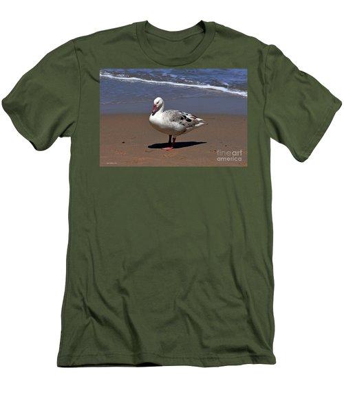 Men's T-Shirt (Slim Fit) featuring the photograph Pretty Goose Posing On Monterey Beach by Susan Wiedmann