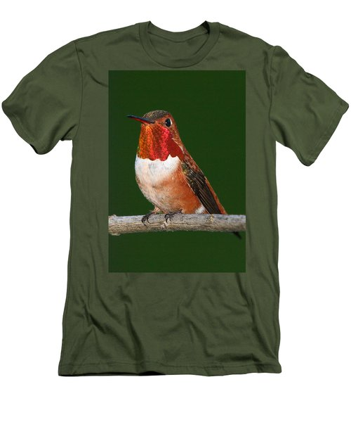 Rufous Hummingbird Men's T-Shirt (Athletic Fit)