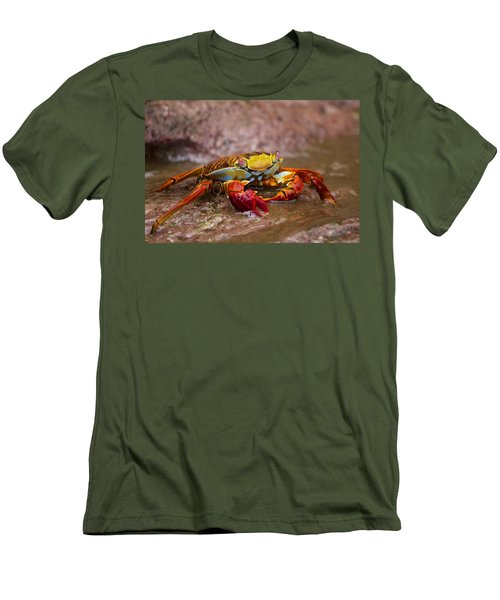 Sally Lightfoot Feeding Men's T-Shirt (Athletic Fit)