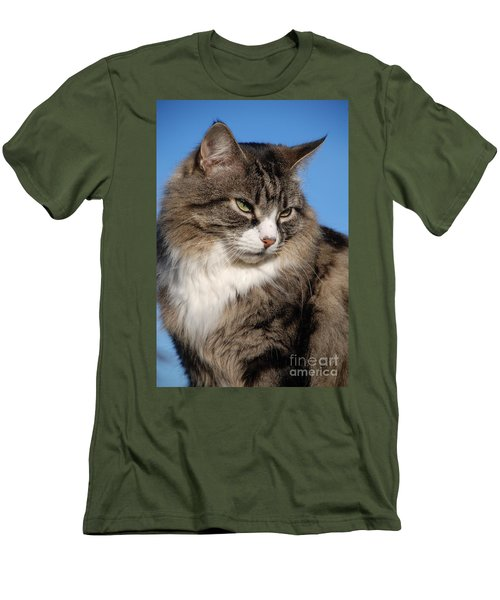 Silver Tabby Cat Men's T-Shirt (Athletic Fit)