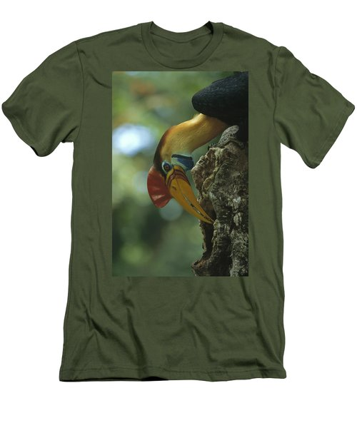 Sulawesi Red-knobbed Hornbill Male Men's T-Shirt (Slim Fit) by Tui De Roy
