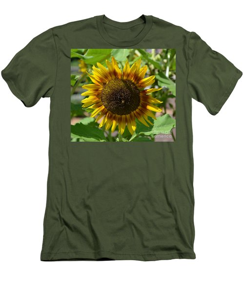 Sunflower Glory Men's T-Shirt (Athletic Fit)