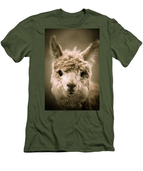 Sweet Alpaca Men's T-Shirt (Athletic Fit)