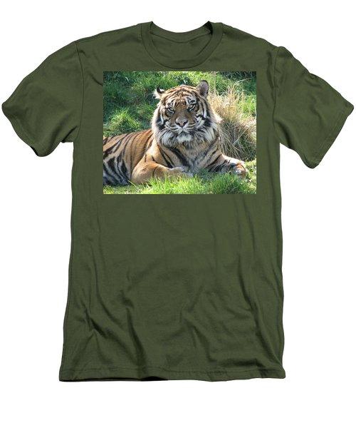 Tiger 2 Men's T-Shirt (Athletic Fit)
