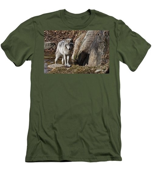 Men's T-Shirt (Slim Fit) featuring the photograph Timber Wolf In Pond by Wolves Only