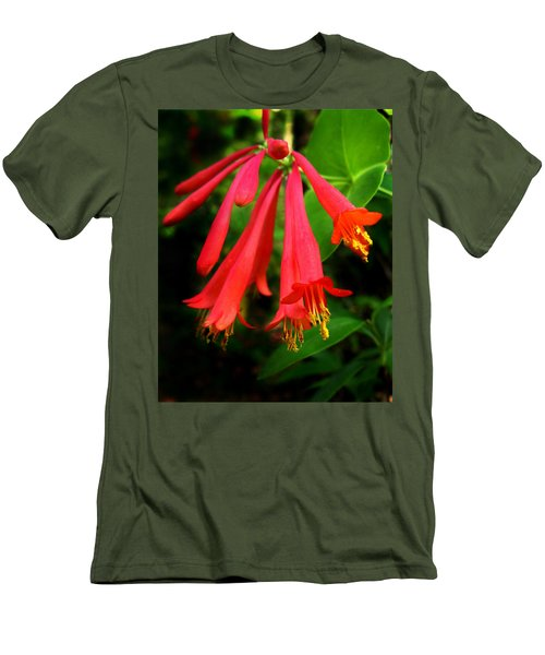Wild Trumpet Honeysuckle Men's T-Shirt (Athletic Fit)