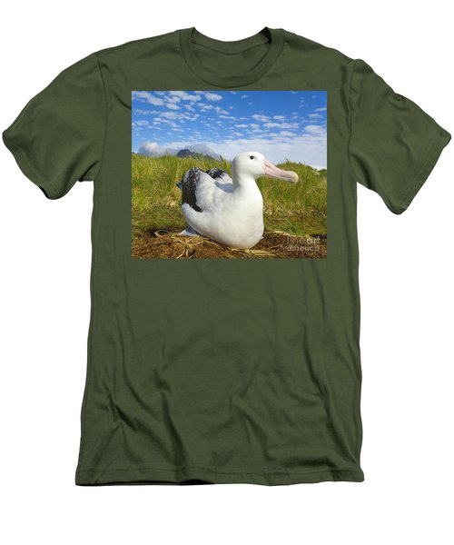 Wandering Albatross Incubating  Men's T-Shirt (Slim Fit) by Yva Momatiuk John Eastcott
