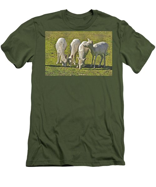 White Fallow Deer Mt Madonna County Park Men's T-Shirt (Athletic Fit)