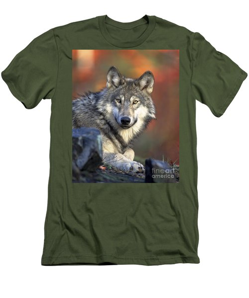 Men's T-Shirt (Slim Fit) featuring the photograph Wolf Predator Canidae Canis Lupus Hunter by Paul Fearn