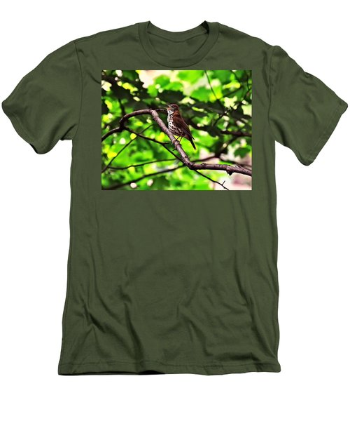 Wood Thrush Singing Men's T-Shirt (Athletic Fit)