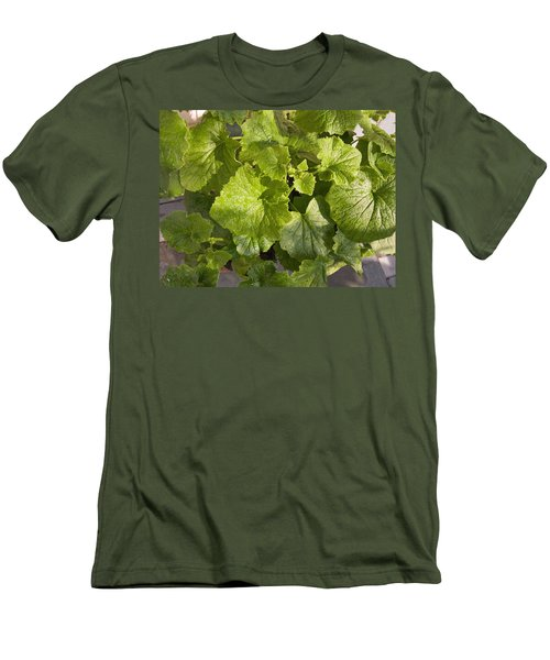 A Green Leafy Vegetable Plant After Watering In Bright Sunrise Men's T-Shirt (Slim Fit) by Ashish Agarwal