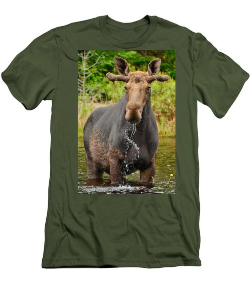 Algonquin Bull Men's T-Shirt (Athletic Fit)
