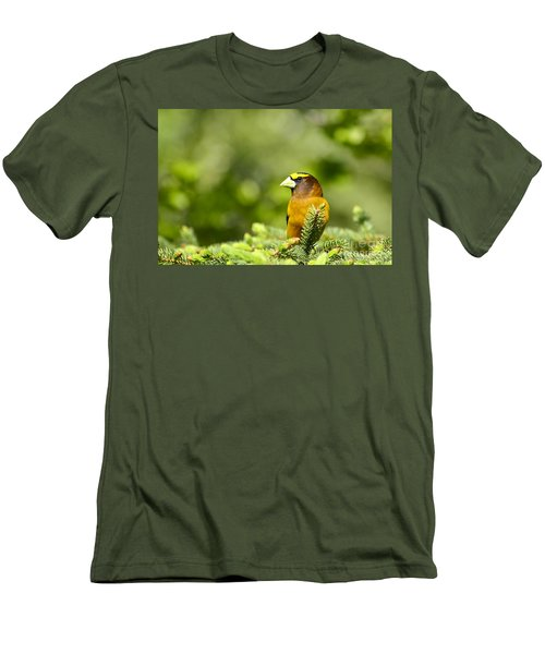 Evening Grosbeak Men's T-Shirt (Athletic Fit)