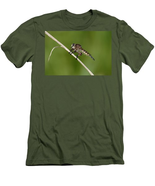 Giant Robber Fly - Promachus Hinei Men's T-Shirt (Slim Fit) by Daniel Reed