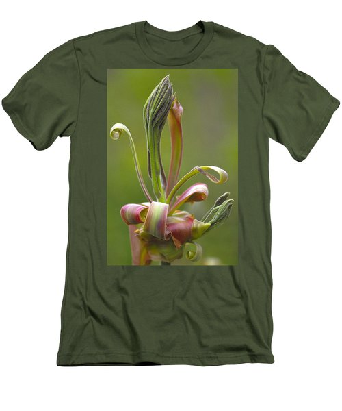 Shagbark Hickory Leaf And Flower Bud Men's T-Shirt (Athletic Fit)