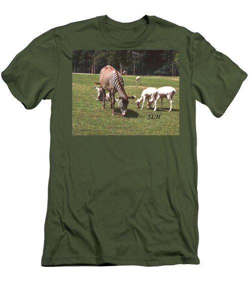Zebra's Grazing Men's T-Shirt (Athletic Fit)