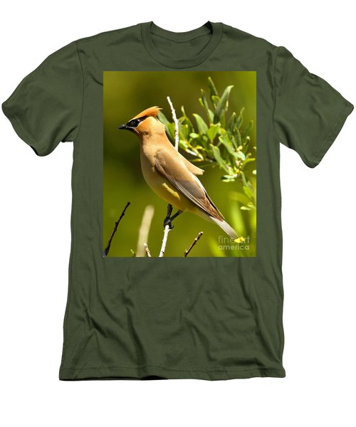 Cedar Waxwing Closeup Men's T-Shirt (Slim Fit) by Adam Jewell