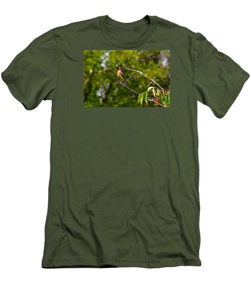 Cedar Waxwing Men's T-Shirt (Slim Fit) by Dan Hefle