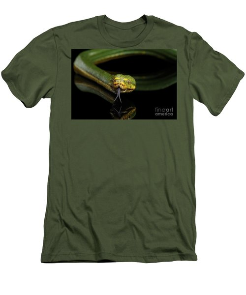 Green Tree Python. Morelia Viridis. Isolated Black Background Men's T-Shirt (Athletic Fit)