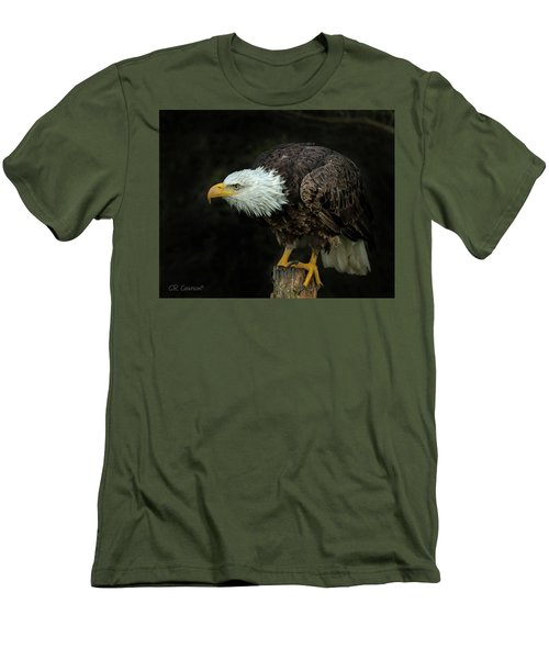 Perched Bald Eagle Men's T-Shirt (Slim Fit) by CR Courson