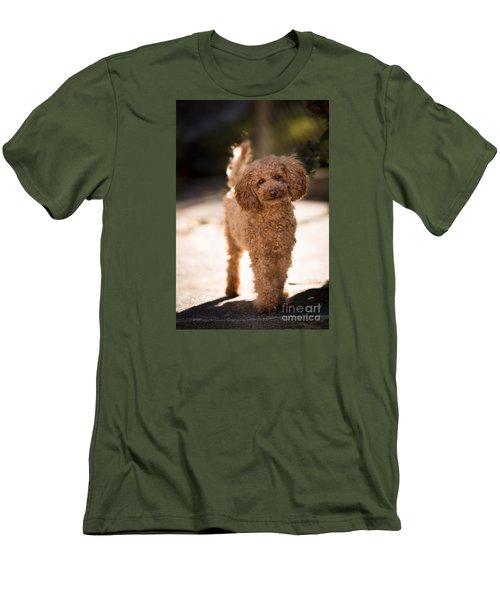 Poodle Men's T-Shirt (Athletic Fit)