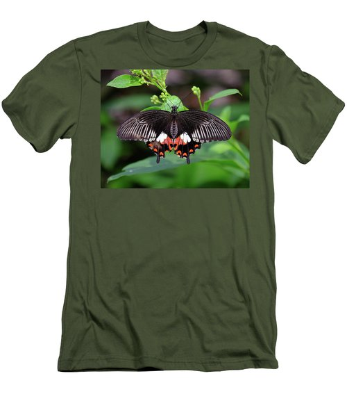 Great Mormon Butterfly Men's T-Shirt (Slim Fit) by Ronda Ryan