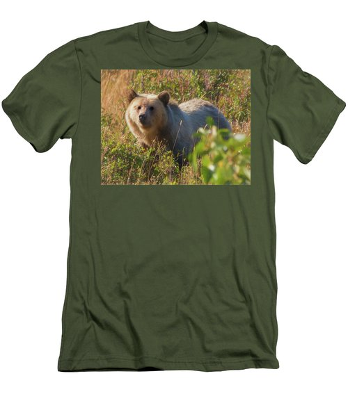 A  Female Grizzly Bear Looking Alertly At The Camera. Men's T-Shirt (Athletic Fit)