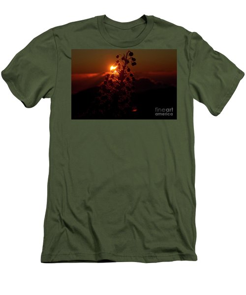 Ahinahina - Silversword - Argyroxiphium Sandwicense - Sunrise Men's T-Shirt (Slim Fit) by Sharon Mau