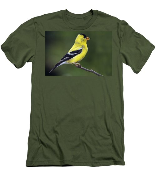 Men's T-Shirt (Slim Fit) featuring the photograph American Golden Finch by William Lee
