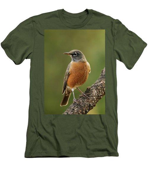 American Robin Men's T-Shirt (Slim Fit) by Doug Herr