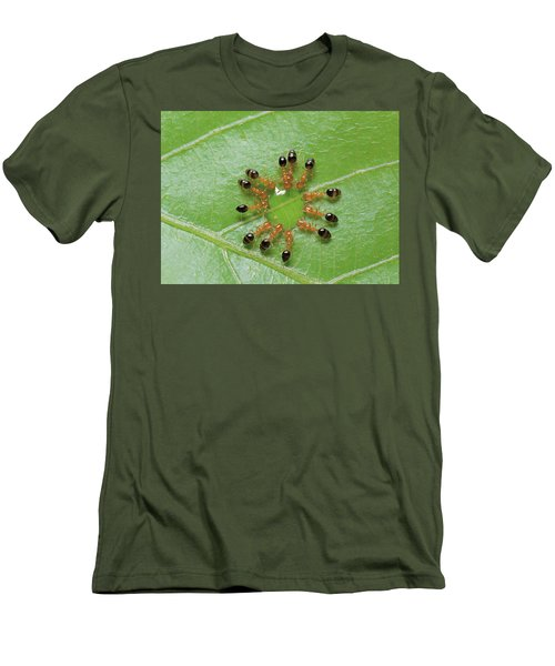 Ant Monomorium Intrudens Group Drinking Men's T-Shirt (Slim Fit) by Takashi Shinkai