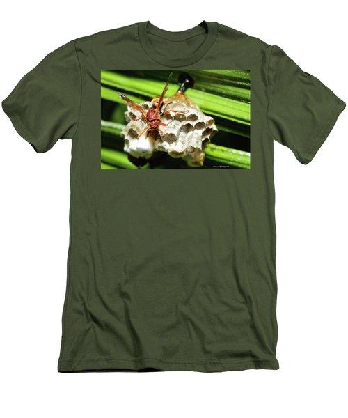 Australian Papper Wasp 772 Men's T-Shirt (Athletic Fit)