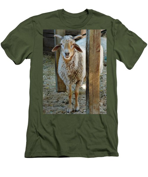 Awassi Sheep Men's T-Shirt (Athletic Fit)