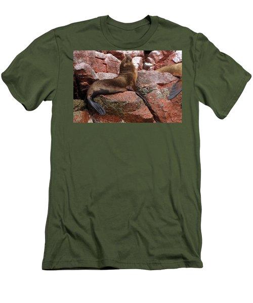 Ballestas Island Fur Seals Men's T-Shirt (Slim Fit) by Aidan Moran