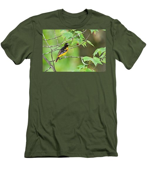 Baltimore Oriole Men's T-Shirt (Slim Fit) by Michael Peychich