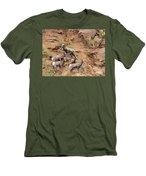 Big Horn Sheep Family Men's T-Shirt (Athletic Fit)