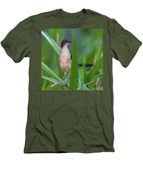 Black-capped Donacobius Men's T-Shirt (Athletic Fit)