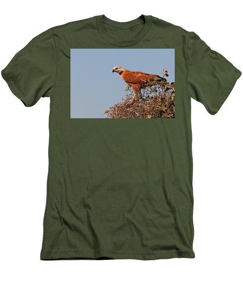 Black-collared Hawk, Pantanal Men's T-Shirt (Athletic Fit)